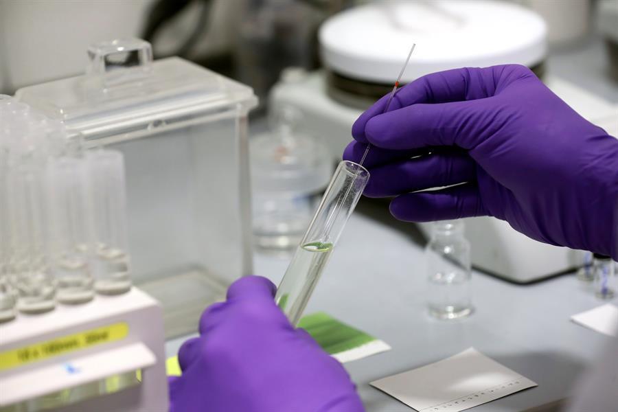 Tècnics de laboratori (EFE)