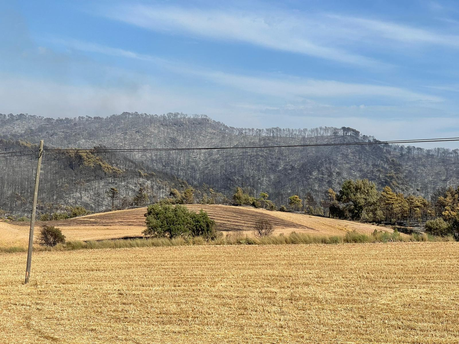 El paissatge cremat al pas de l'incendi de Santa Coloma de Queralt / Quico Sallés